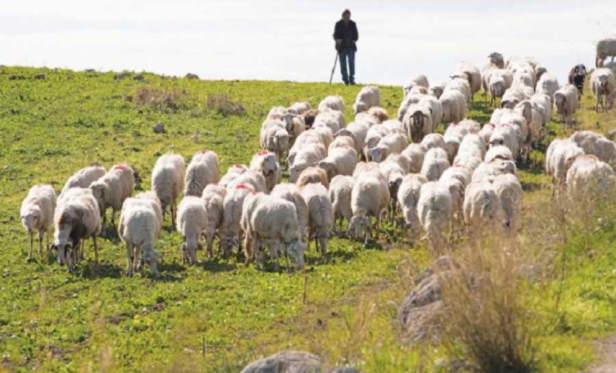 Εφαρμογή νέων μέτρων για την προστασία των κτηνοτρόφων