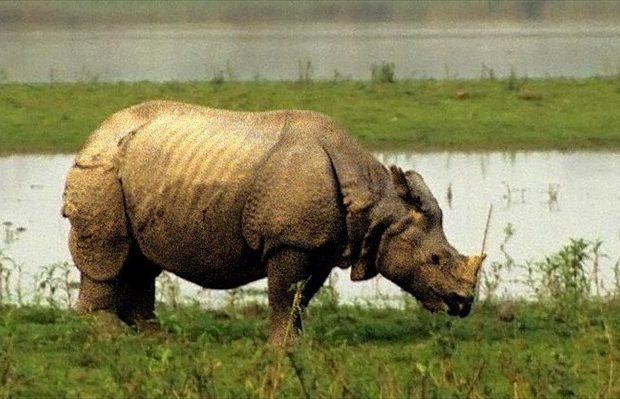 Πέθανε ο τελευταίος αρσενικός ρινόκερος της Σουμάτρα