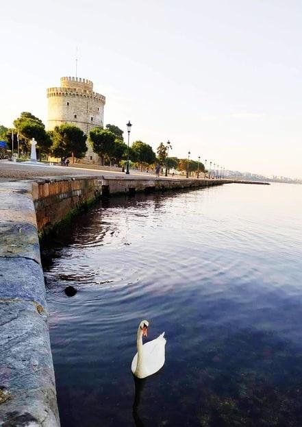 Ένας κύκνος στην παραλία Θεσσαλονίκης!