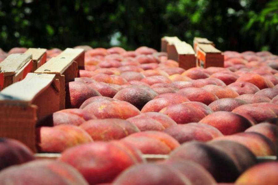 Ημαθία: Σύσκεψη της ΠΚΜ με θέμα το επιτραπέζιο ροδάκινο