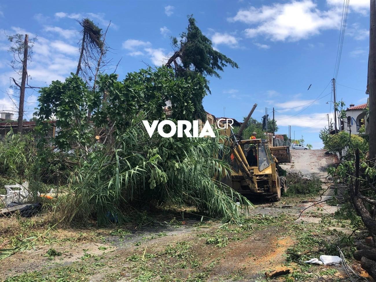 Χαλκιδική: Συνεργεία απομακρύνουν δέντρα