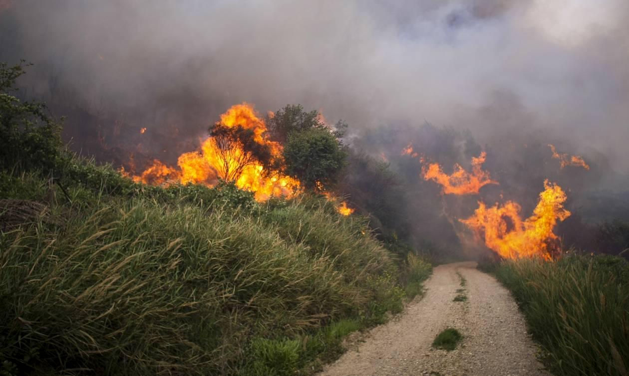 Εύβοια: Μεγάλη φωτιά ξέσπασε – Συναγερμός στην Πυροσβεστική