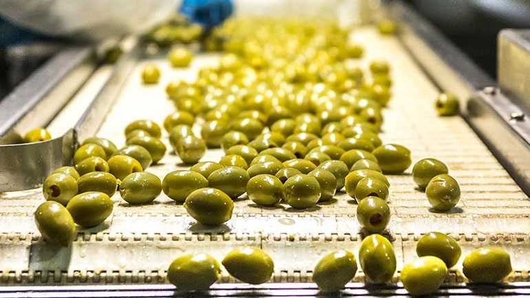 Χαλκιδική: Σημαντικά μειωμένη αναμένεται η φετινή παραγωγή πράσινης ελιάς