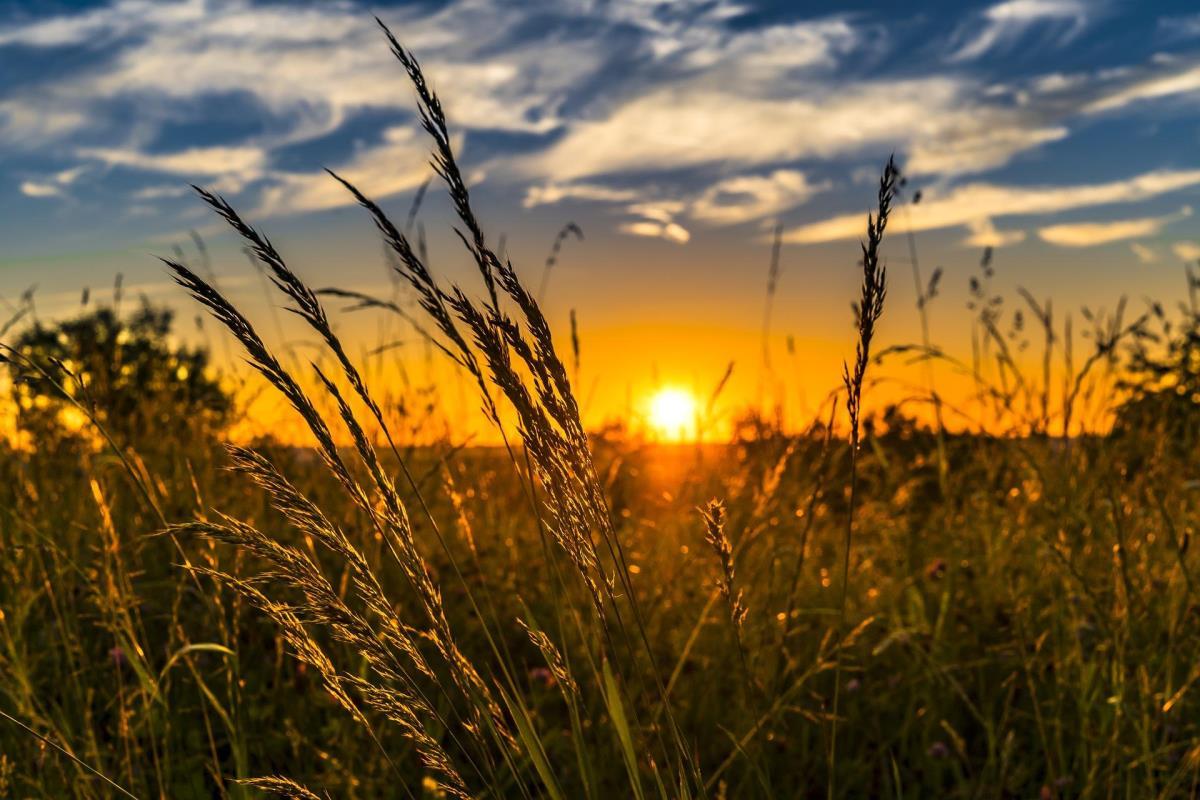 Αναφορά του Απόστολου Πάνα για την πρόωρη λήξη καρτών συμβολαιακής γεωργίας
