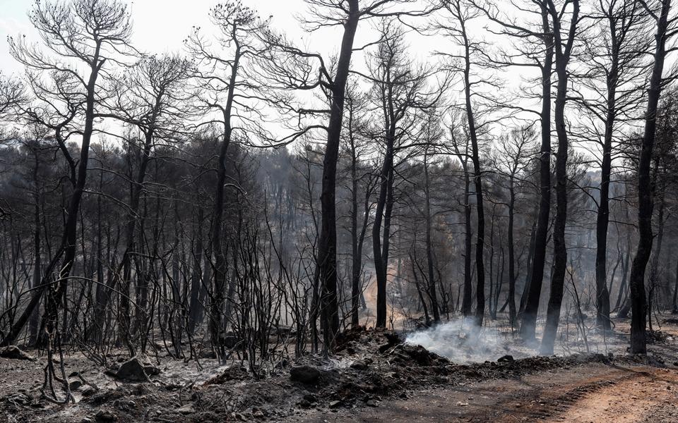 Διερευνάται το άλλοθι ενός υπόπτου για την πυρκαγιά στην Εύβοια
