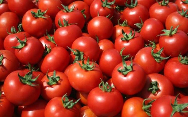 Έρευνα: Οι ντομάτες κάνουν καλό στο σπέρμα των ανδρών και στη γονιμότητα