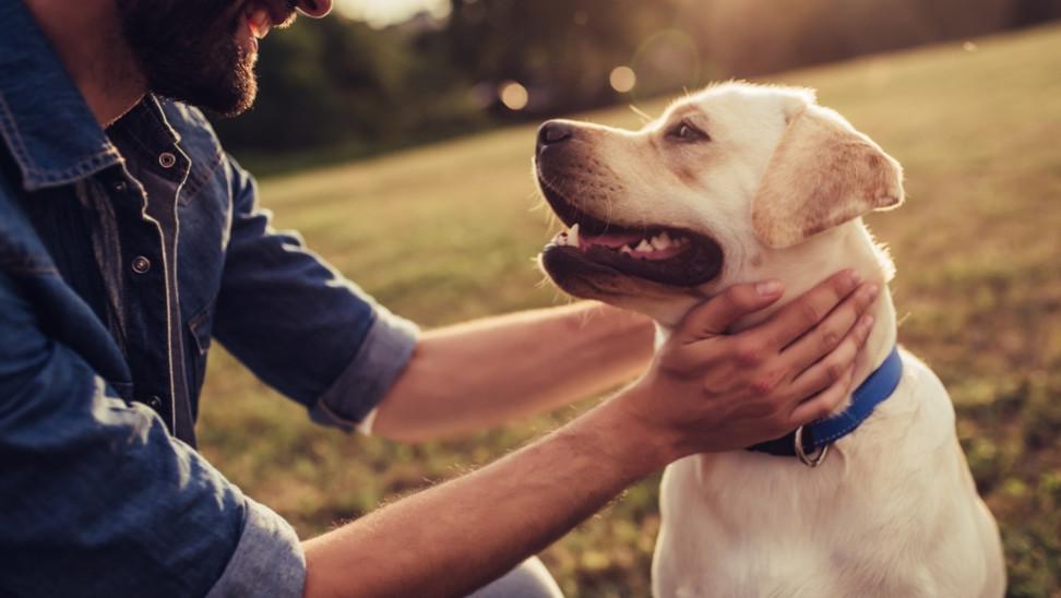 Όσοι έχουν σκύλο ζουν περισσότερο – Ειδικά αν έχουν επιβιώσει από εγκεφαλικό ή έμφραγμα