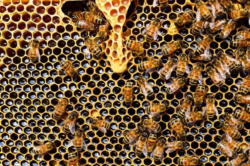 Αφαίρεσαν 53 κυψέλες μελισσών σε Θεσσαλονίκη και Χαλκιδική –Περισσότερα από 5.000 ευρώ η λεία