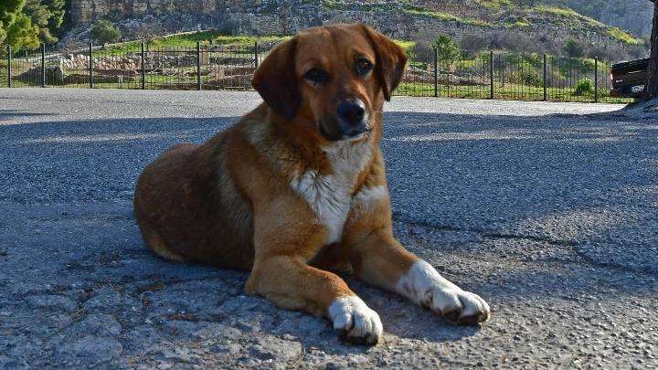 Τι συμβουλεύουν οι κτηνίατροι για τα κατοικίδια στο lockdown