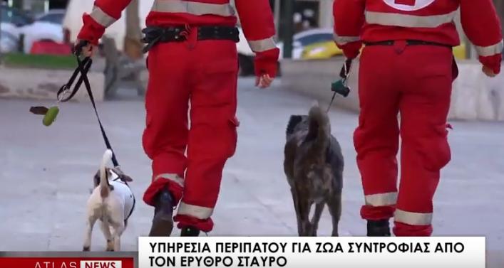 Υπηρεσία περιπάτου για ζώα συντροφιάς από τον Ερυθρό Σταυρό