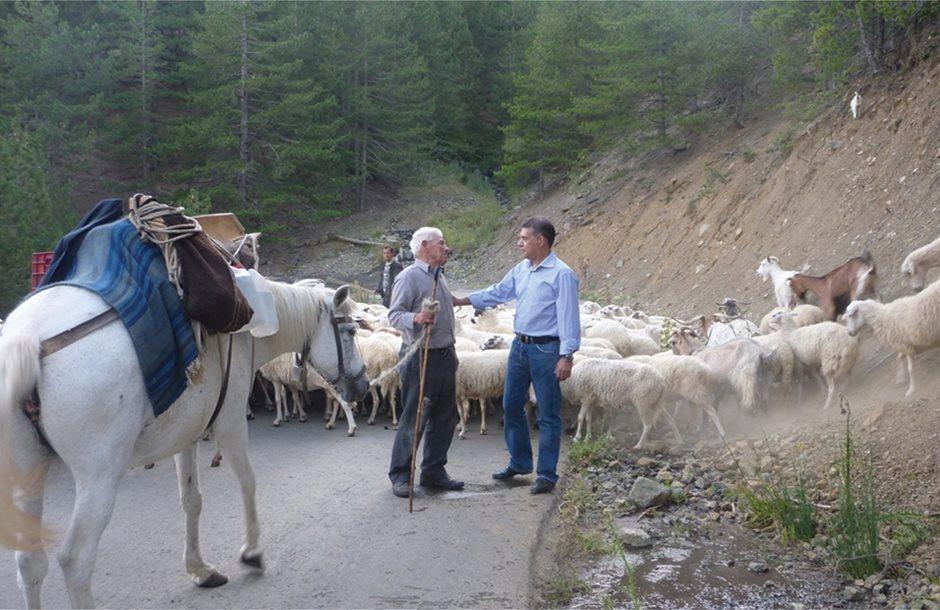 Ευρεία μάζωξη κτηνοτρόφων στο Κτήμα Βρύση Τυρνάβου για ζωοτροφές και Απόθεμα